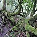 照片 032-樹林穿毛衣.jpg