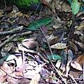 照片 004- 竹節蟲.jpg