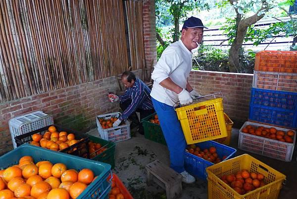 照片 099-柑橘農.jpg