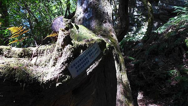 照片 011-大溪站查處林木.jpg