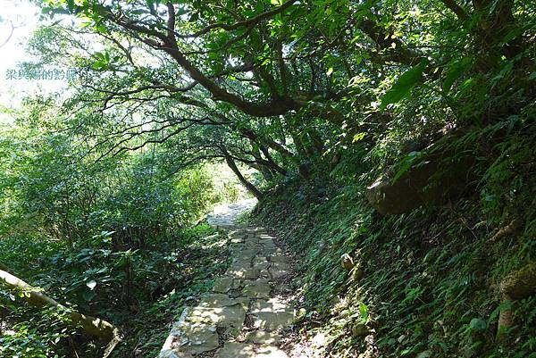 P1160874-中正山親山步道.JPG