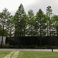 新家庭院空間落羽松一.jpg