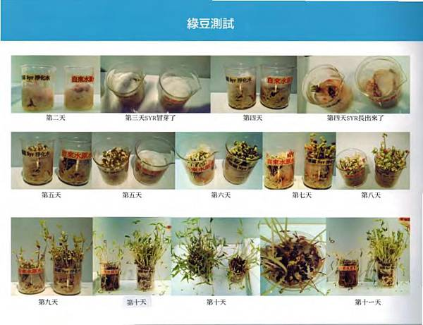 14綠豆成長_1