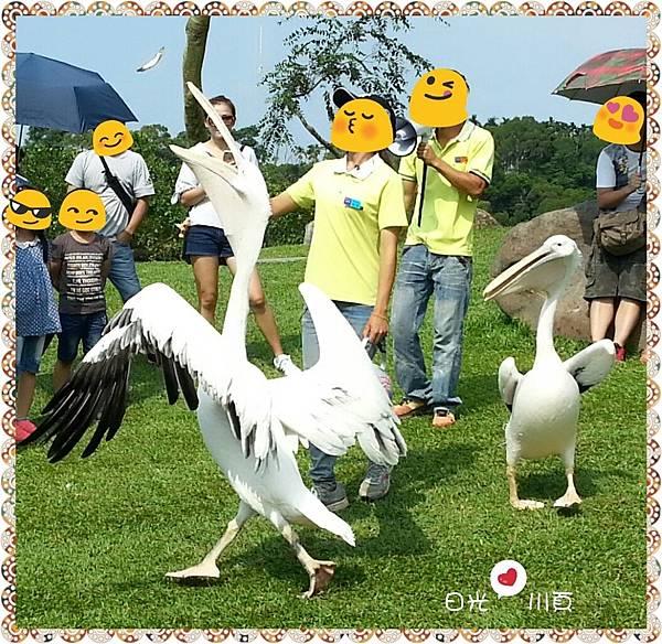 PhotoGrid_1506653892967