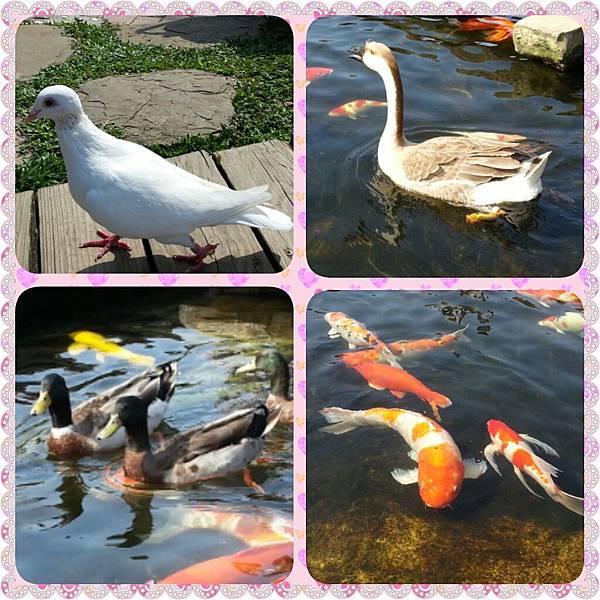 PhotoGrid_1506862378987
