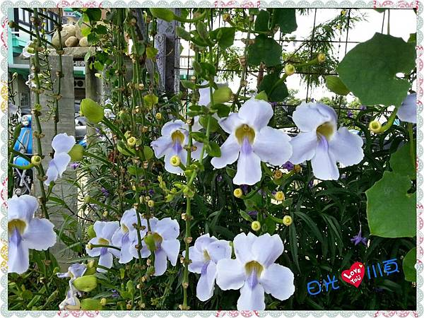 PhotoGrid_1506609708774