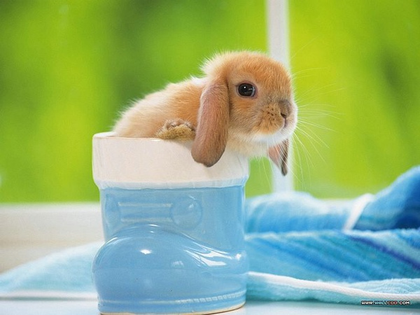[wallcoo_com]_Lovely_rabbit_Picture_0da033068s.jpg