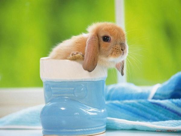 [wallcoo_com]_Lovely_rabbit_Picture_0da033068s.jpg