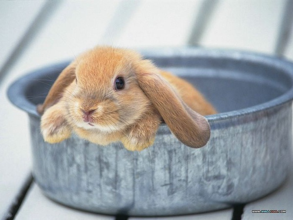 [wallcoo_com]_Lovely_rabbit_Picture_1da033003s.jpg