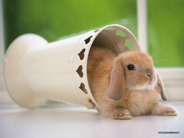 [wallcoo_com]_Lovely_rabbit_Picture_1da033023s.jpg