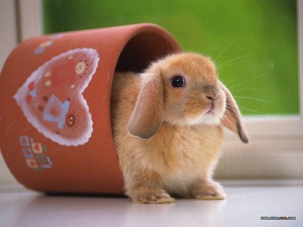 [wallcoo_com]_Lovely_rabbit_Picture_1da033025s.jpg