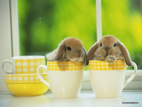 [wallcoo_com]_Lovely_rabbit_Picture_1da033054s.jpg