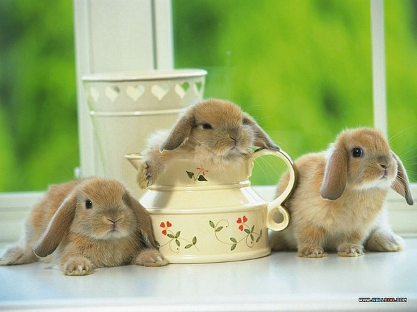 [wallcoo_com]_Lovely_rabbit_Picture_1da033056s.jpg