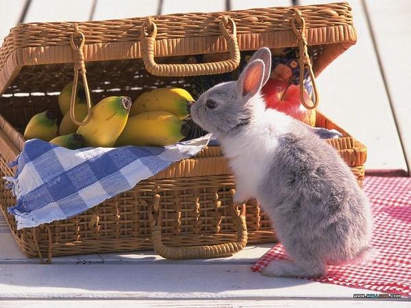 [wallcoo_com]_Lovely_rabbit_Picture_da033043s.jpg
