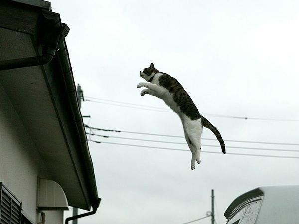 homeless_cat_00dsa04-019600-b-x.jpg