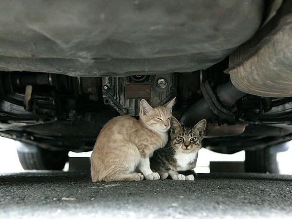 homeless_cat_00dsa04-020225-b-x.jpg