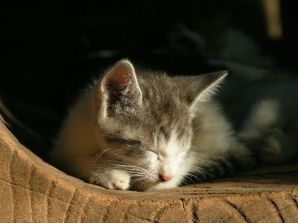homeless_cat_00img_5239-x.jpg
