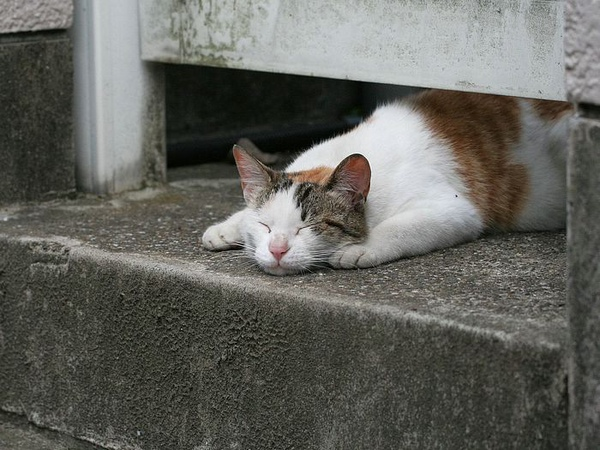 homeless_cat_00kdn-000136-s-x.jpg