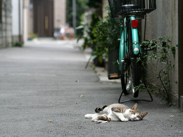 homeless_cat_00kdn-002909-x.jpg