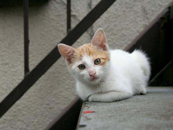 homeless_cat_00kdns-001801-x.jpg