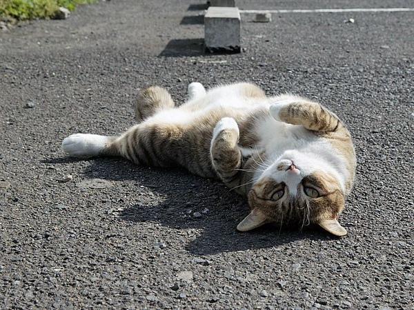 homeless_cat_dsa04-004490-x.jpg