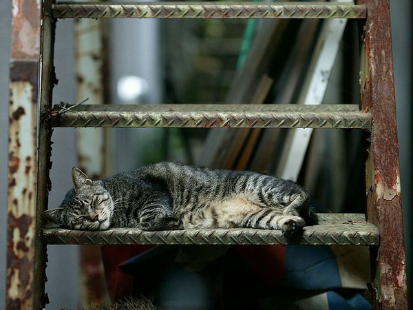 homeless_cat_dsa04-014305-x.jpg