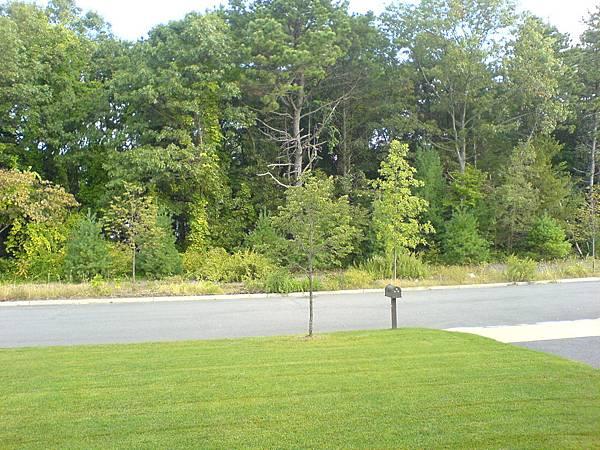 大門對面的樹林.JPG