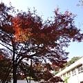井之頭公園_002.JPG