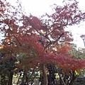 井之頭公園_003.JPG