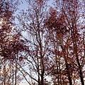 飯店腹地的樹林