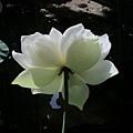 nEO_IMG_IMG_2165.jpg