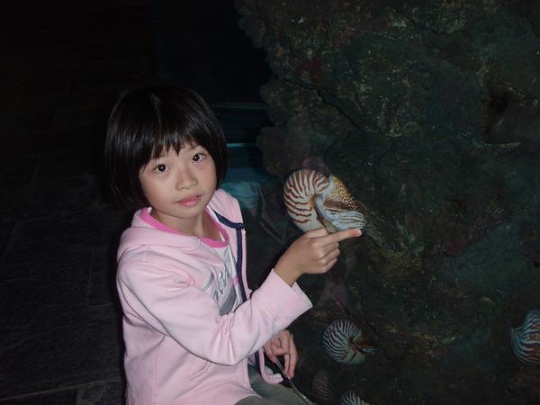 鸚鵡螺...