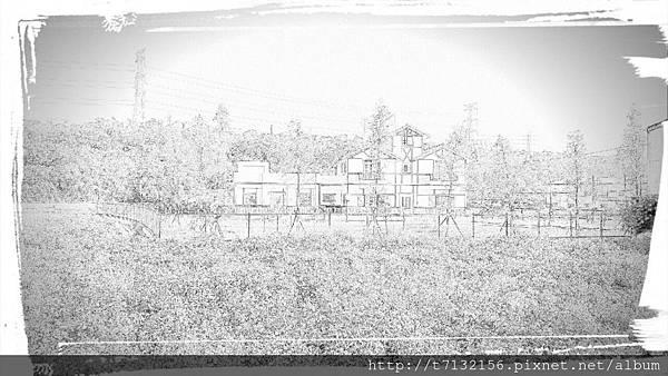 2015919桃園大溪韭菜花田_6446.jpg