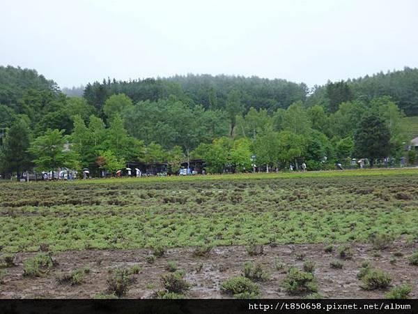 北海道 126.jpg