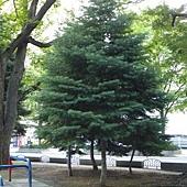 北海道 832.jpg