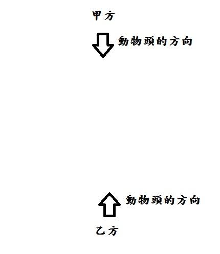 動物棋.jpg