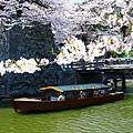 櫻花下的輕舟