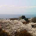 登高望琵琶湖