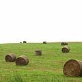 夢想中的草原