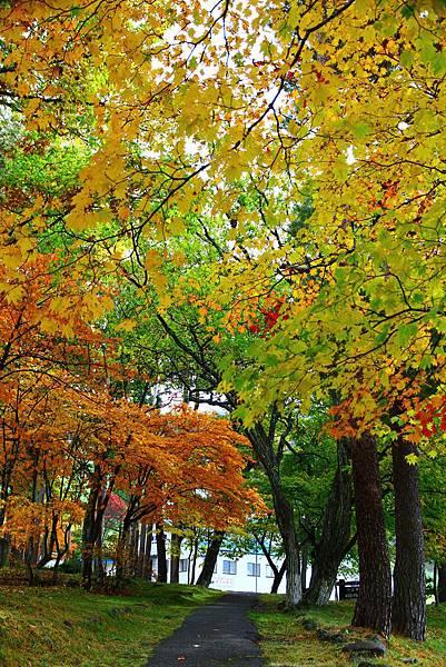 蔵王ロープウェイ旁的紅葉