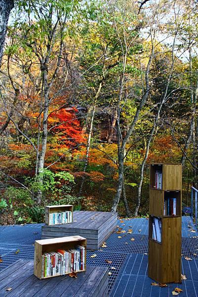 秋天限定的紅葉圖書館
