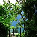 Sentiero dell 'Olivo