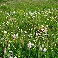 滿山遍野的野花
