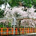 4/13 上賀茂神社
