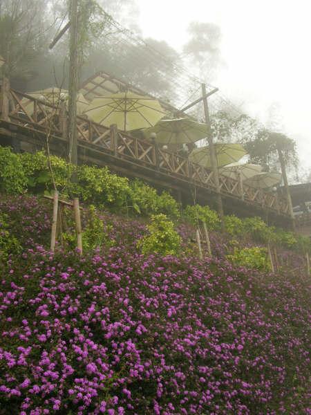 勝興-咖啡花園