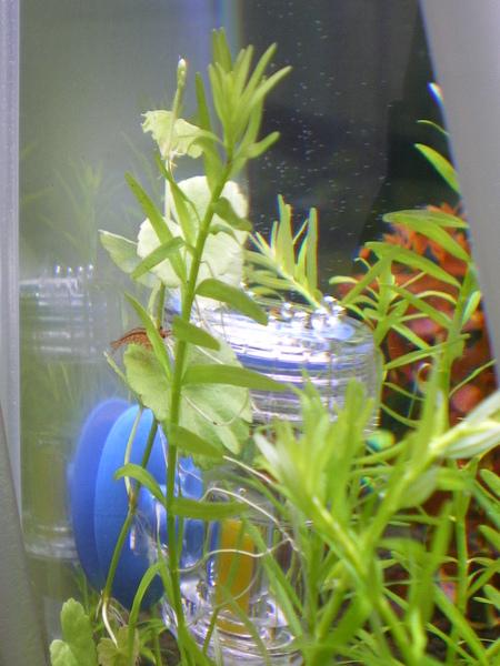 藏在後面的香香草怪