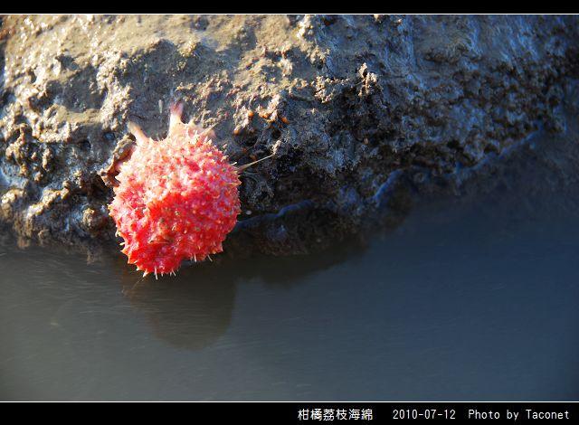 柑橘荔枝海綿_02.jpg
