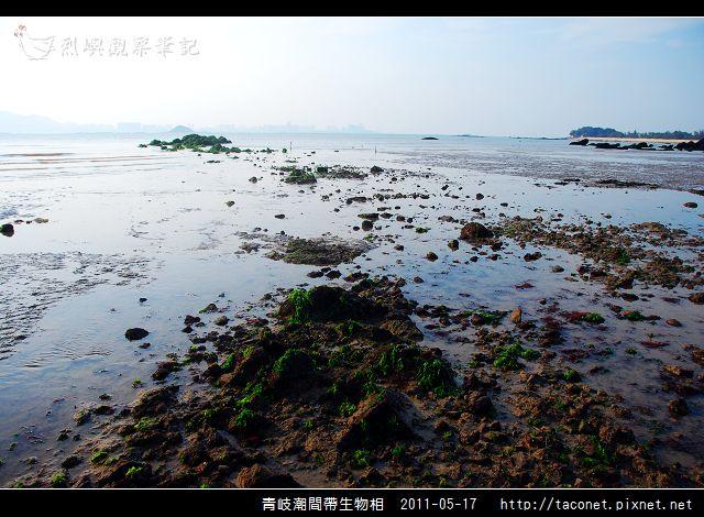 潮間帶生物_07.jpg