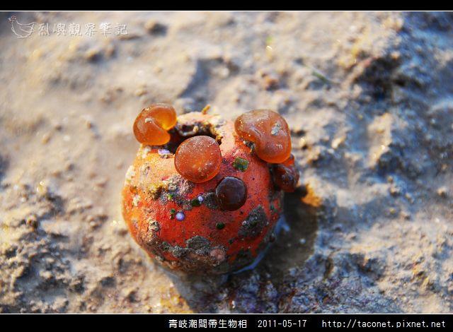 潮間帶生物_30.jpg