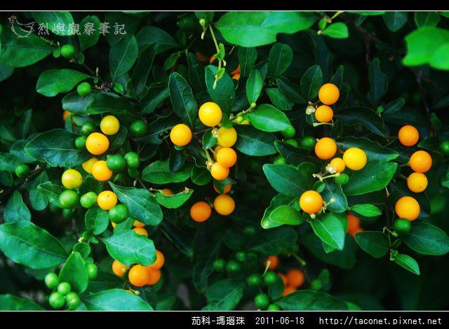 茄科-瑪瑙珠_02.jpg